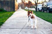 Passejar mascotes a més de 200 metres del domicili serà sancionable
